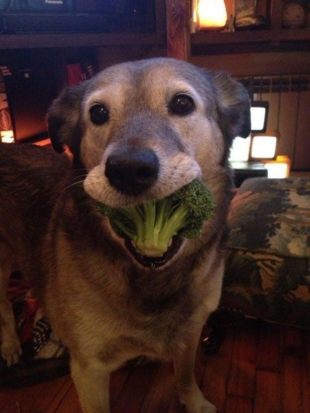 cachorro-idoso-com-brocolis-na-boca