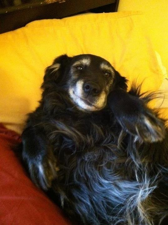 cachorro-idoso-com-sorriso-bobo