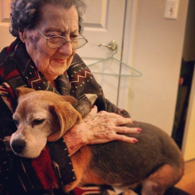 cachorro-idoso-sendo-abraçado-por-tutora