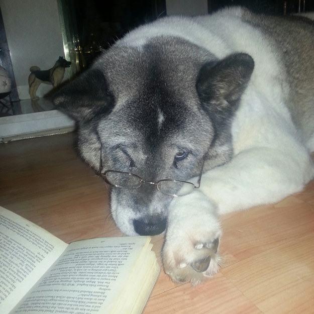 cao-idoso-de-oculos-lendo-livro