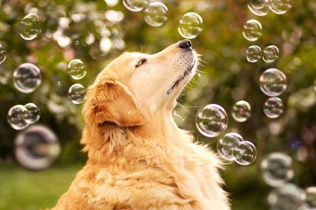 cachorro-mais-feliz-do-mundo