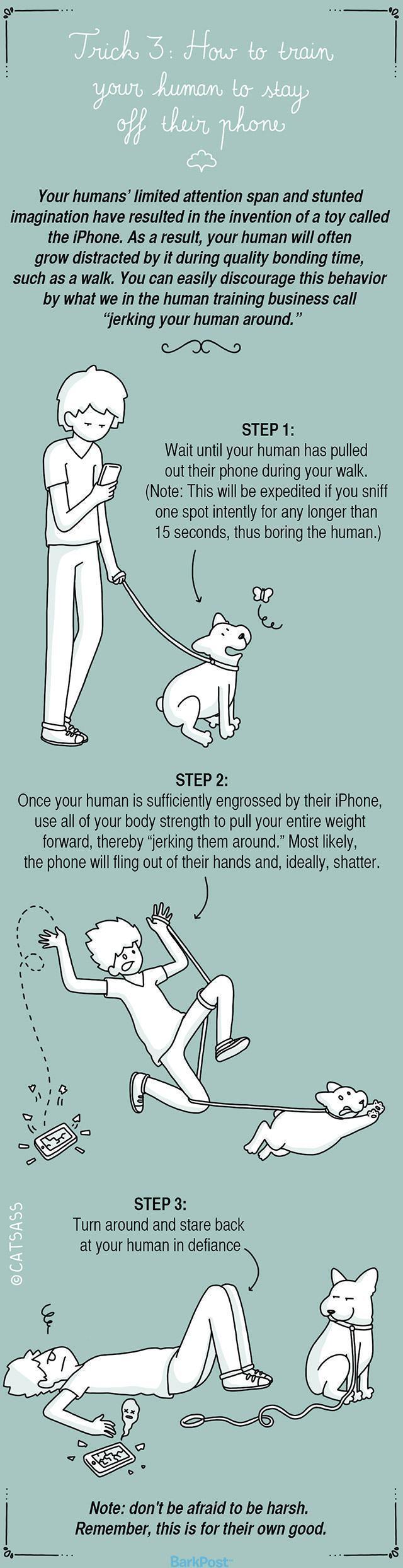 como-treinar-o-seu-humano-3