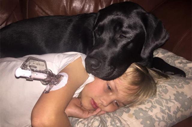 Conheça o cão que, diariamente, 'salva' menino diabético