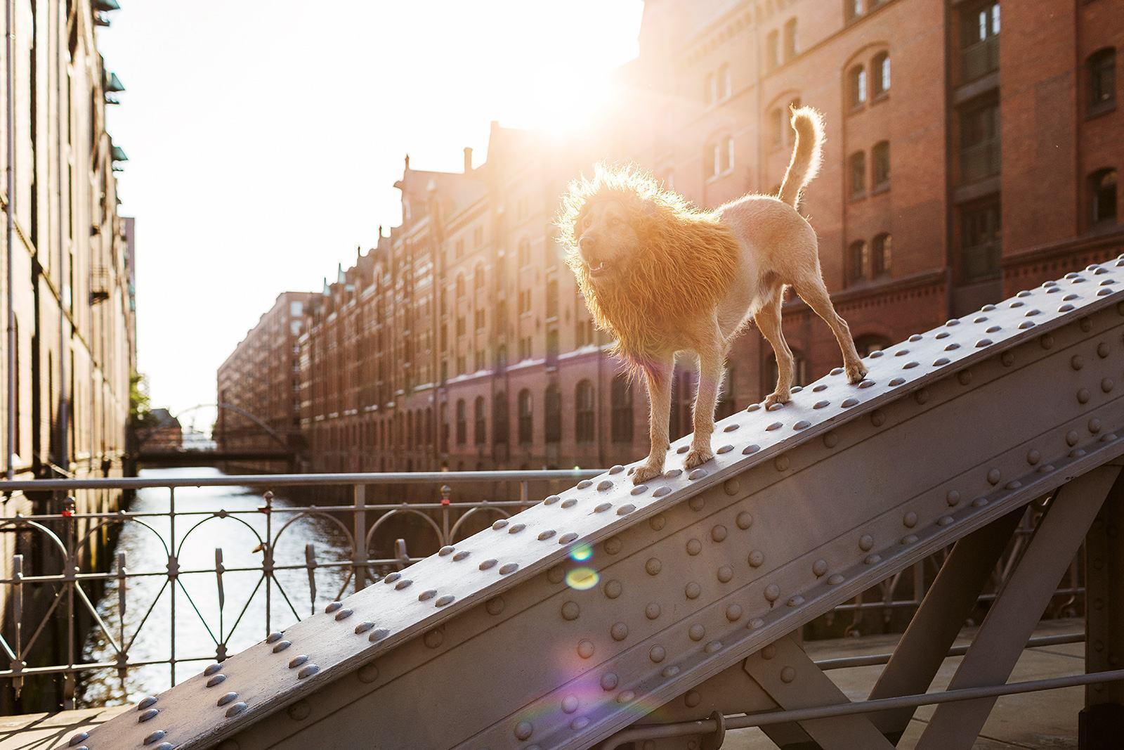 cachorro-encontrado-na-rua-agora-vira-modelo-fotografico