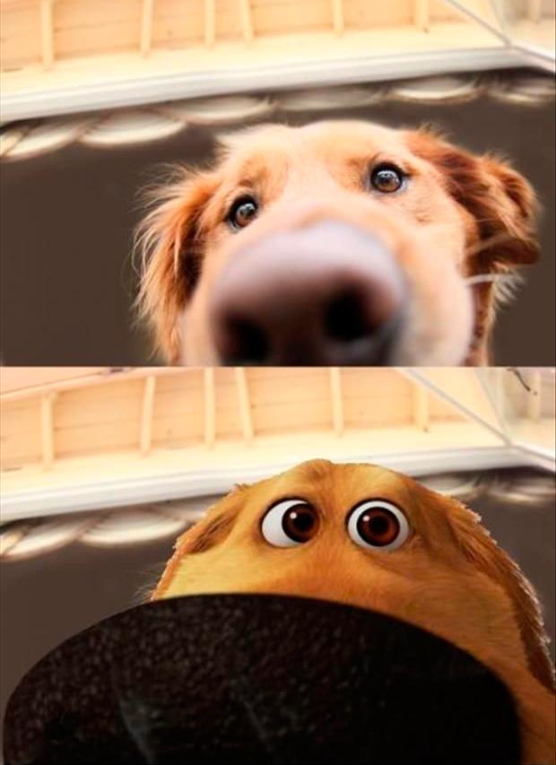 imagem-comparativa-de-cachorro-com-o-cao-do-filme-up-altas-aventuras
