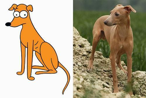imagem-comparativa-de-cachorro-com-o-cao-do-seriado-de-animacao-os-simpsons