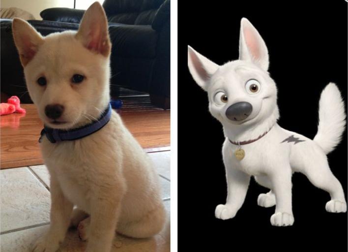 imagem-comparativa-de-cachorro-com-supercao