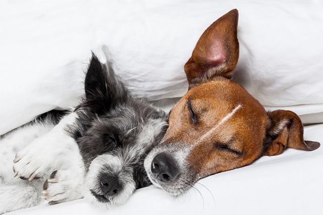 Imagem de cães juntos