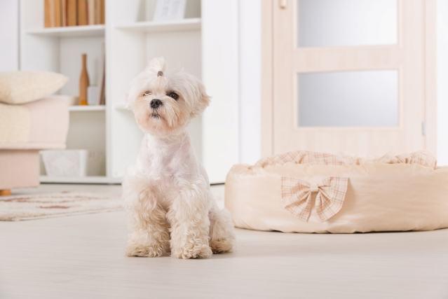 Imagem de cão em sala de casa