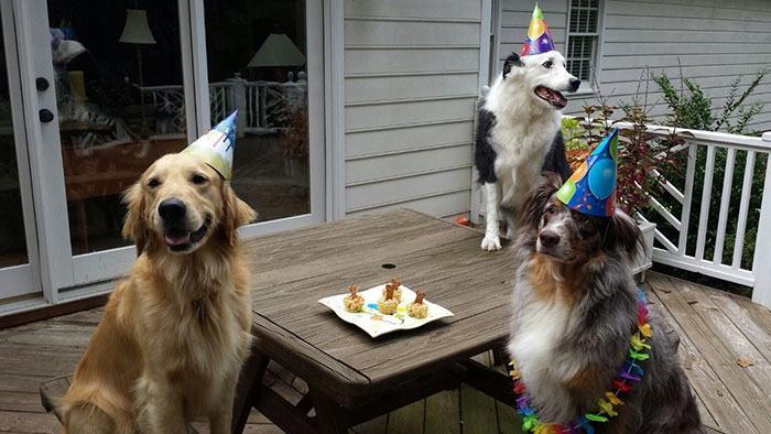 cachorro-comemorando-aniversário-com-amigos