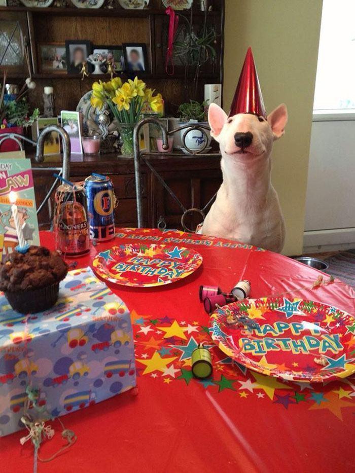 cachorro-esperando-amigos-para-festa