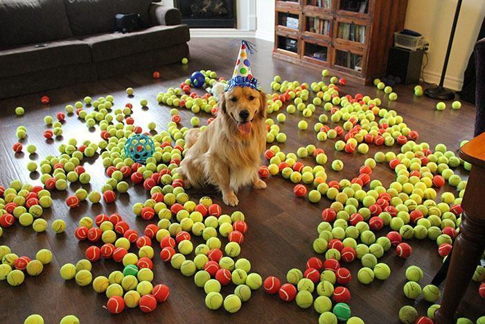 cachorro-com-seu-presente-de-aniversario