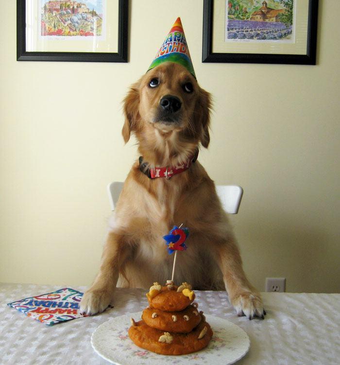 cachorro-em-aniversario-com-cara-de-pidao