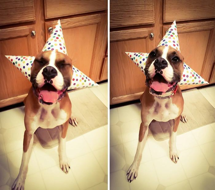 cachorro-com-varios-chapeis-de-aniversario