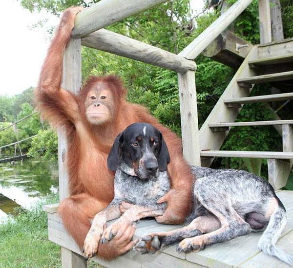 suryia-a-orangotando-e-seu-melhor-amigo-roscoe