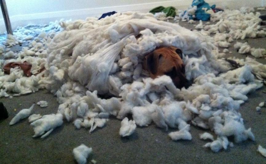 cachorro-destruiu-estofado