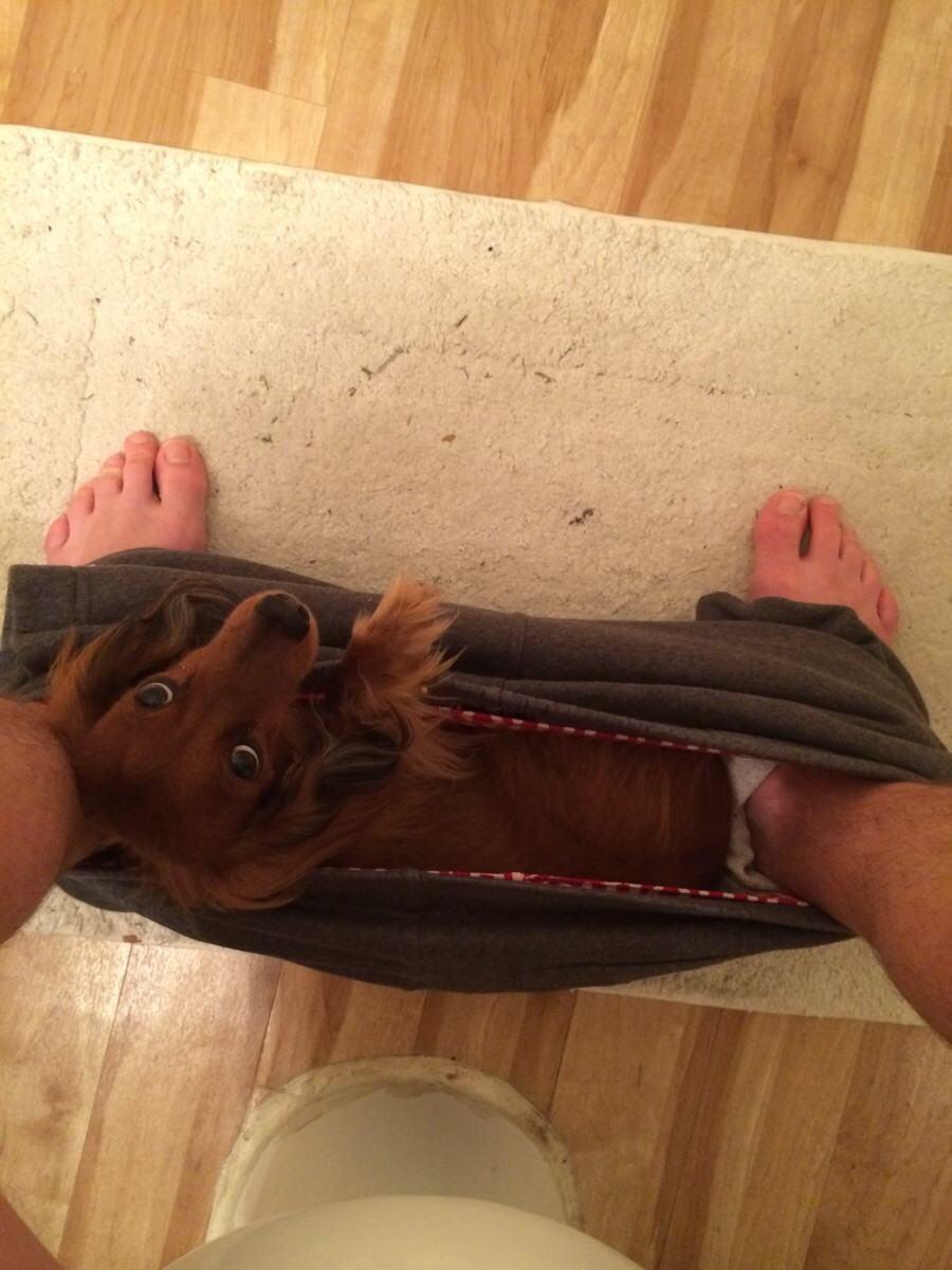 cachorro-entre-pernas-de-tutor-enquanto-ele-está-no-banheiro