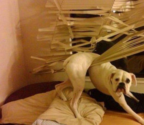 cachorro-preso-em-persiana