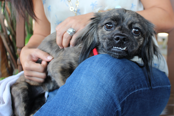 genie-cadela-paralisada
