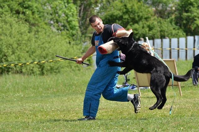 Imagem de adestrador treinando cão