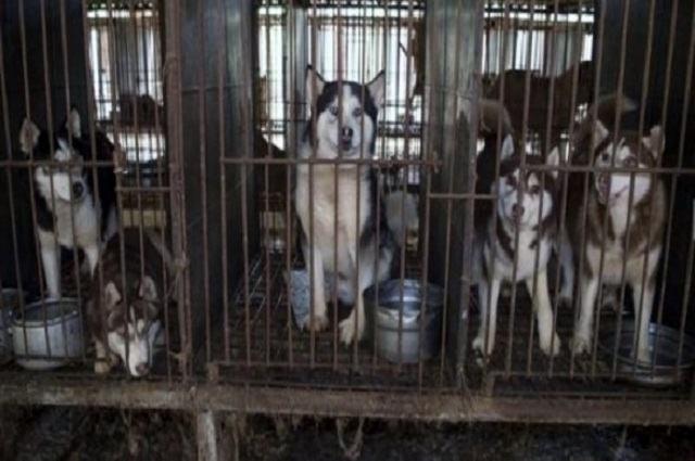 Imagem de cães presos em gaiolas