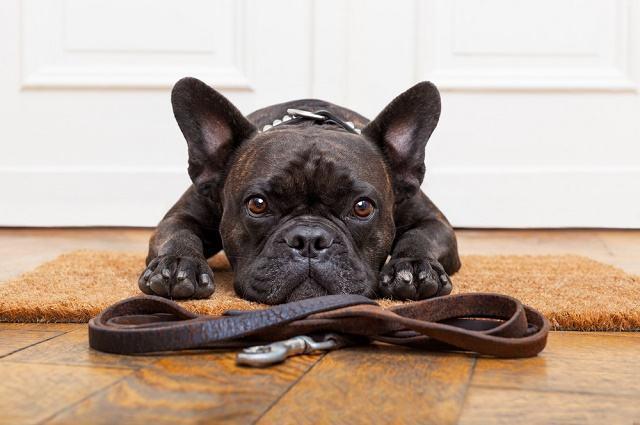 Imagem de cão deitado em tapete