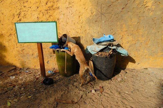 Imagem de cão em-busca de comida no lixo