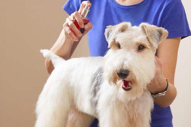 Imagem de mulher aplicando perfume em cão