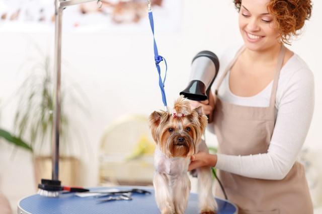 Imagem de mulher secando pelo de cão